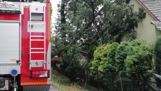 Drzewo runęło na budynek - FOTO - InfoBrzeszcze.pl
