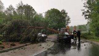 Drzewo spadło na samochód w Bobrku – ZDJĘCIA!