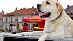 Dzień psa w gminie Kęty: Kęczanie podali pomocną dłoń i pomogli bezdomnym zwierzakom!