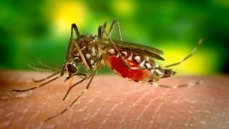 Komary potraktują także dymami... - InfoBrzeszcze.pl