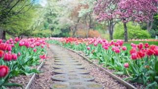 Mój Piękny Ogród – czas na zgłoszenia