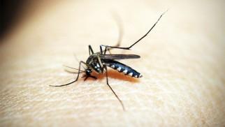 Od dzisiaj gmina Oświęcim walczy z komarami