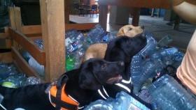 OSP Kęty - szkolenie z udziałem psów ratowniczych