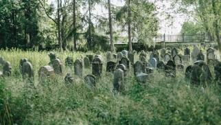 OŚWIĘCIM. Pomóż uporządkować cmentarz żydowski