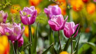 Pięć pomysłów na odświeżenie ogrodu na wiosnę