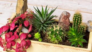 Zbiórka roślin w Światowy Dzień Ziemi