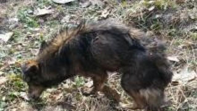 Brzeszcze. Dzielnicowi znaleźli wychudzonego psa. Teraz szukają jego właściciela lub nowego domu