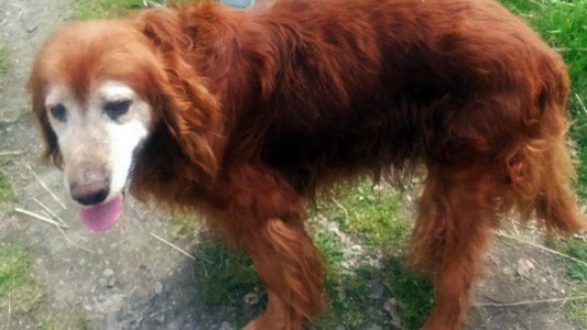 Bydlak zakopał psa żywcem – FOTO
