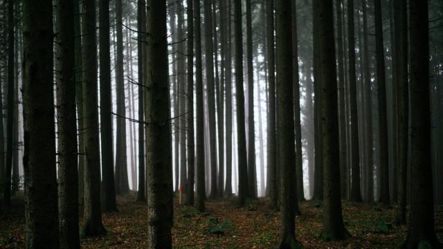 CHEŁMEK. Podczas spaceru zabłądzili w lesie