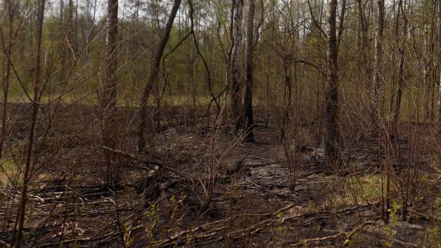 CHEŁMEK. Podpalili las i uciekli na stadion. Sprawcy mają po 10 lat
