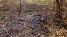 Chełmek. Pożar lasu. Sprawcami podpalenia dwaj nieletni chłopcy
