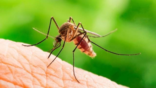 Dlaczego gryzą nas komary? - InfoBrzeszcze.pl