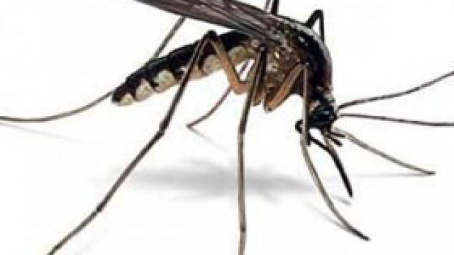 Gmina Kęty nie będzie walczyła z komarami za pomocą oprysków