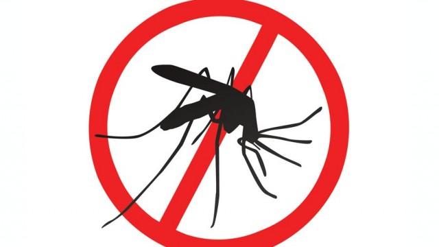 Gmina powalczy z komarami - wkrótce ruszy odkomarzanie - InfoBrzeszcze.pl