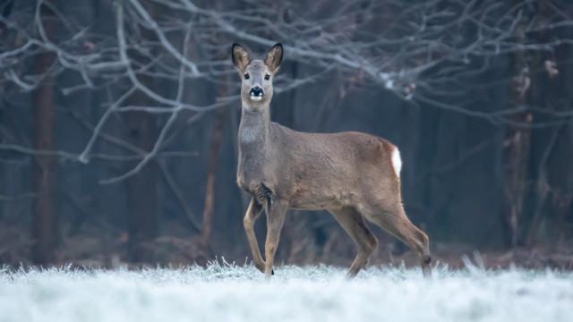 IMGW: w weekend do Polski może zawitać zima