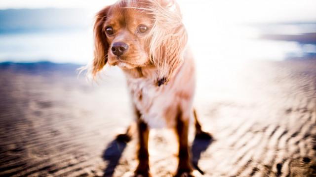 Jak pomóc psu przetrwać upał?