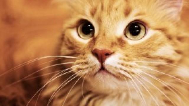 Jasnorudy kotek szuka swojego właściciela