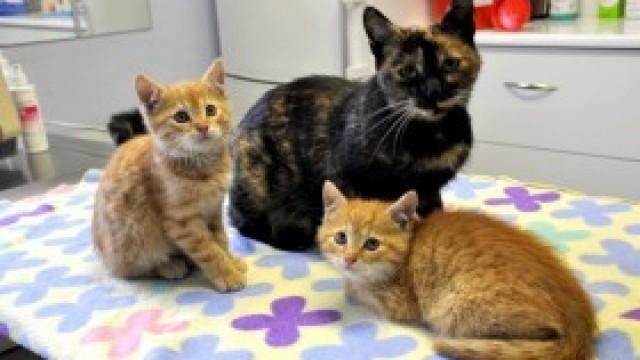 Kocięta jak z bajki i ich piękna mama szukają nowego domu