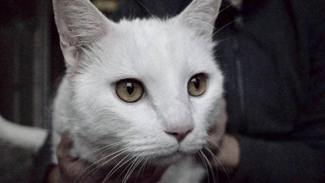 Koty w oświęcimskim schronisku czekające na nowego właściciela - zobacz te piękności