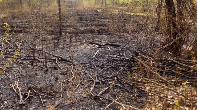Las w Chełmku podpaliło dwóch 10-letnich chłopców.