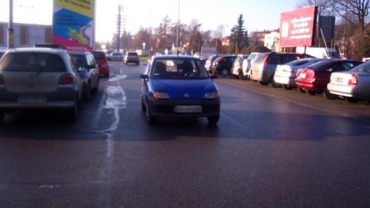 Łosie na drogach nie tylko zimowych