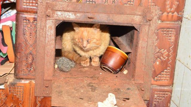 Martwe zwierzęta w domach. Helena R. usłyszała zarzuty