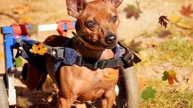 Maxiulek – pies, który ma ogromną chęć biegania – FILMY