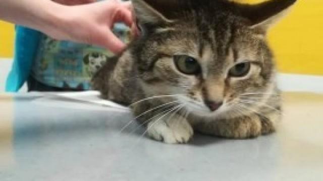 Na pomoc Basi – kotce, do której… strzelano!