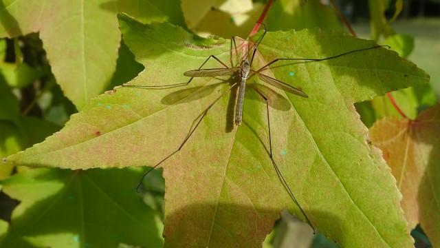 Nie dla oprysków przeciw komarom w gminie Kęty