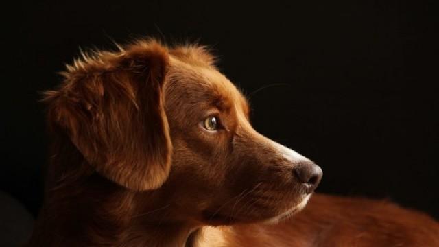 Obowiązkowe szczepienie psów przeciwko wściekliźnie