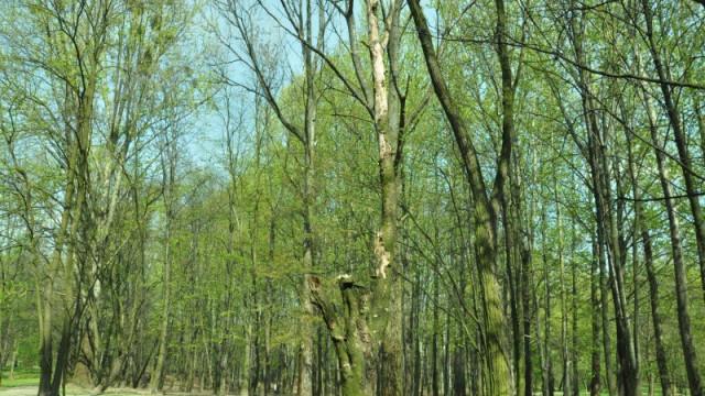 Ogławianie szkodzi drzewom i podlega wysokim karom