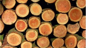 Ogłoszenie Wójta Gminy o sprzedaży drewna