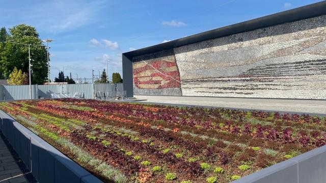OŚWIĘCIM. 2500 roślin utworzyło mozaikę przed dworcem kolejowym