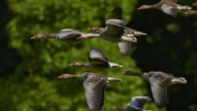 Oświęcim. Apel służb weterynaryjnych o podjęcie działań zapobiegających rozprzestrzenianiu się ptasiej grypy