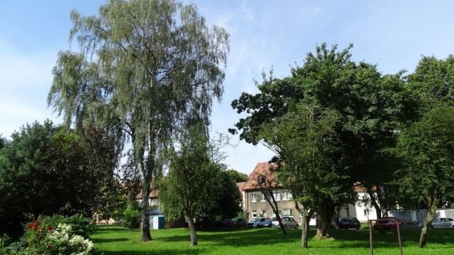 OŚWIĘCIM. Drzewa posadzone przez nazistów rosną do dziś