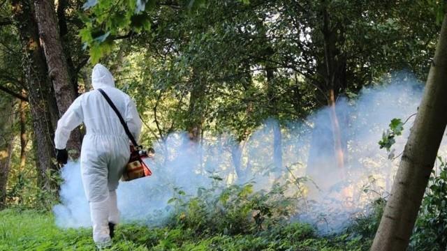 OŚWIĘCIM. Miasto walczy z komarami. Wyda blisko 30 tys. złotych