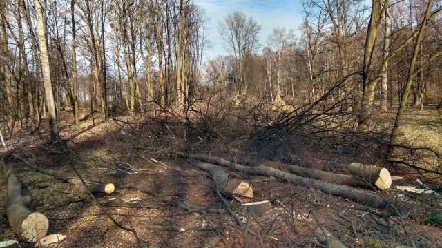 OŚWIĘCIM. Powstaje park Pokoju. Łącznie zostanie wcięte około 320 drzew