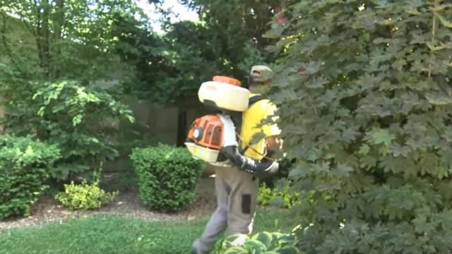 Oświęcim. Trwa walka miasta z komarami
