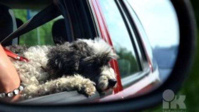 Pamiętaj, nie zostawiaj dzieci ani zwierząt w rozgrzanym samochodzie!