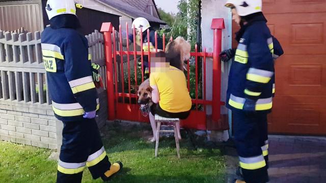 Pies nabił się na ogrodzenie. Z pomocą ruszyli strażacy. ZDJĘCIA!