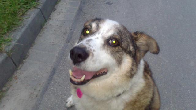 Planowana zmiana opłaty za psa