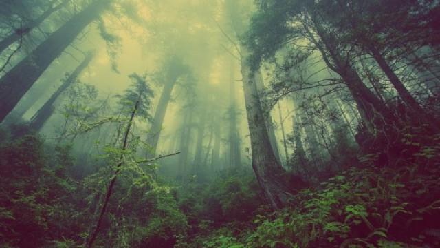 Posadź las, weź pieniądze
