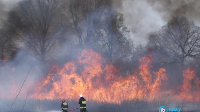 Potężny pożar lasu w Kętach