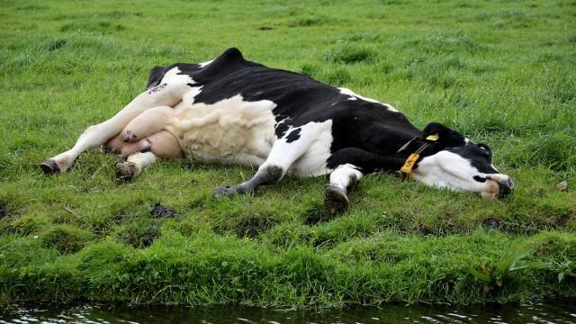 POWIAT. Gdzie jest mięso z chorych krów?