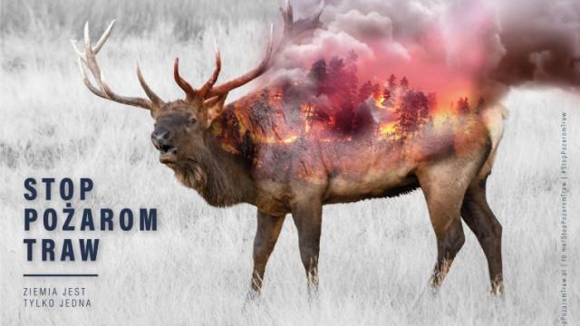 POWIAT. Wypalanie traw może się wiązać z sankcjami karnymi