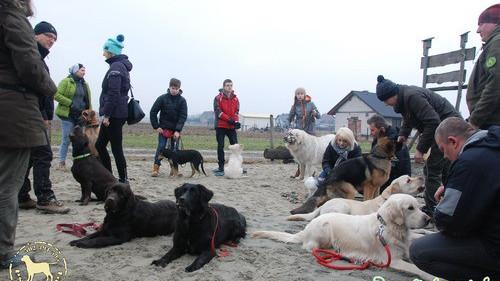 POWIAT. Z dużą pasją i cierpliwością można spotkać się w Szkole Psiej Tresury psieEgo w Wieprzu koło Andrychowa.