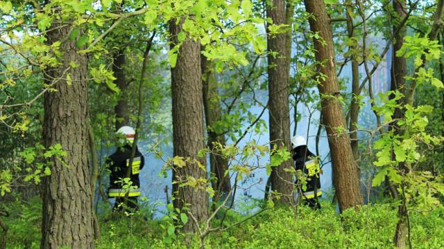 Pożar ściółki leśnej w Bobrku. ZDJĘCIA !