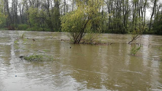 Poziom rzek zbliża się do poziomów alarmowych. Pierwsze zgłoszenia o lokalnych podtopieniach. ZDJĘCIA !