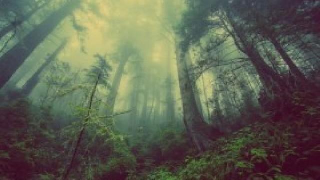 Rolniku, posadź las – uzyskaj wsparcie z ARiMR