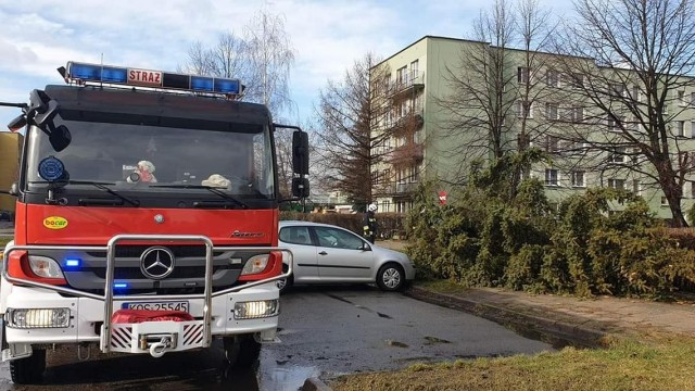 Strażacy OSP interweniowali w związku z usuwaniem skutków silnego wiatru - ZDJĘCIA! - InfoBrzeszcze.pl